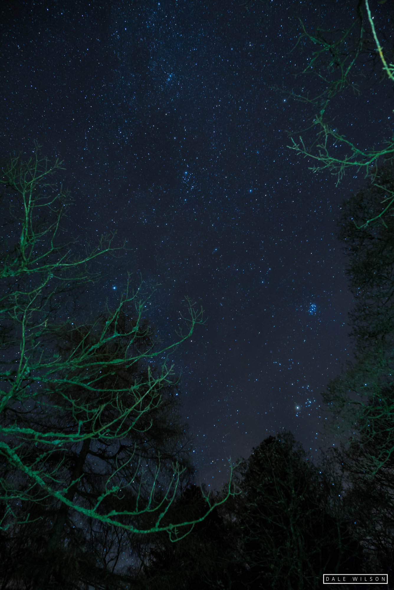 Stars and trees flash photography surprise view lake district